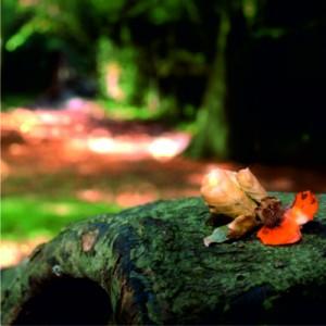 Waldkindergarten die Tummetotts
