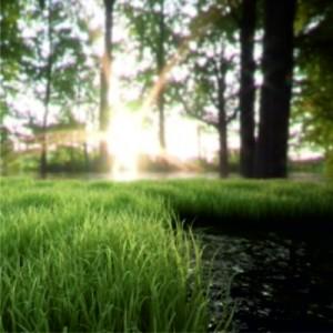 Konzeption Waldkindergarten die Tummetotts